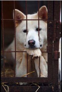 先ずはトピを作って 韓国・平昌の犬肉レストラン、五輪開催中のメニュー提供自粛を拒否 2/8(木) 22:52 時事通信/