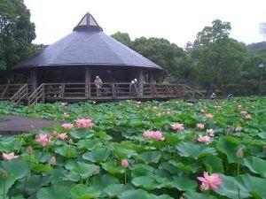 早起きおじさんの記録(1941年生) 花豆さん・ナナピーさんおはようございます。 花豆さん・この綺麗な緑の花が白菜なのでしょうか?野菜の収