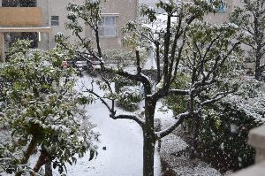 年上男性,大歓迎(*^_^*) 今年は、例年に無く、大雪が関東地方を襲う様な気がしてならない。    *今年1月14日の関東地方の初