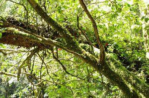 居酒屋『我が家』 (^_^)/ へいっ! いらっしゃいっ!! 開店時間(書き込み時間)は平日(月~金)18時~25時まで、休日はFreeといたします。 ( ̄▽ ̄)/ 倒木に苔が生えて幻想的な雰囲気がいい感じでしたね~。