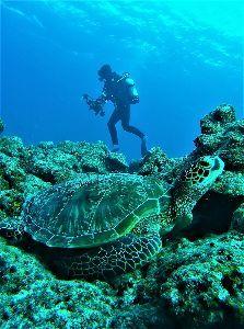 沖縄好きダイビングチームメンバー募集 大崎ハナゴイリーフにて撮影待ちする市川さん&アオウミガメ、可愛かったね♪