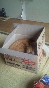 我が家のペット達です癒されて。 箱が大好き!