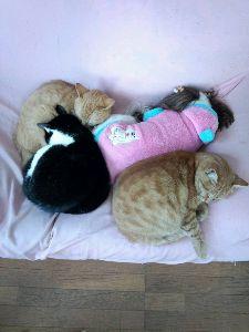 我が家のペット達です癒されて。 みんな仲良く寝てますね