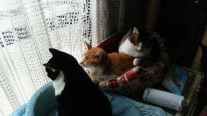 我が家のペット達です癒されて。 三匹のこれから寝る所です。
