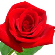 9501 - 東京電力ホールディングス(株) 不労所得の薔薇 とか 寄り成りも孤高ちゃんを相手して道連れ削除されてから変わったものら  さすがにこ