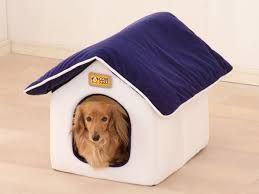 6176 - (株)ブランジスタ ジョンって俺の友達が飼ってる犬と同じ名前wwwwwwww  ジョン!!!!!!!  ハウス!!!!!
