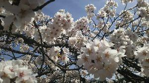 ひと休み 2 葉桜お月か、、(-_-。)  えいっ!