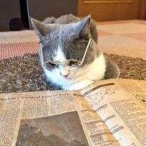 猫式ニャム SSを撮っておいた記事、読みかえしています。ありがとうございます。m(_ _)m