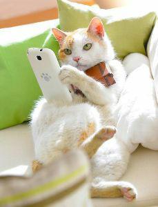 猫式ニャム ゆっくりゲームできるニャム🐈  またニャム🐈
