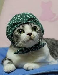 猫式ニャム ニャム🐾