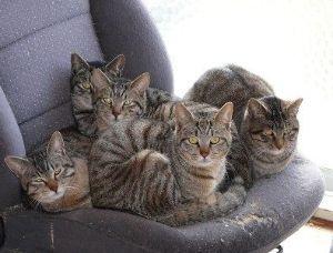 猫式ニャム あにゃ。削除厳しい😿 ニャム!!師匠、動物園のみなさま、こんばんは。 ニャム!!師匠、遅くまでおつか