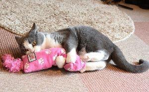 猫式ニャム にゃ。おつかれさまです。m(_ _)m