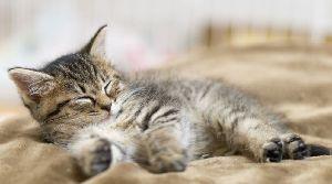 猫式ニャム ニャム!!師匠、動物園のみなさま、こんばんは。 ニャム!!師匠、遅くまでおつかれさまです。m(_ _