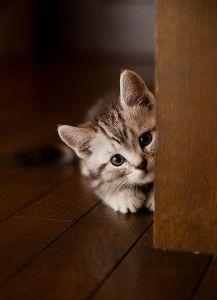 猫式ニャム 二ャム!!師匠、ありすさん、動物園のみなさま、おはようございます。