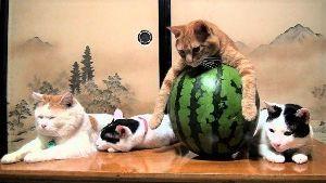猫式ニャム ニャム!!師匠、yumeさん、動物園のみなさま、おはようございます。