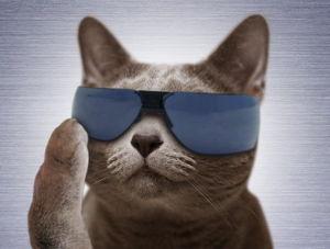猫式ニャム ニャム!!師匠、yumeさん、動物園のみなさま、こんばんは。 ニャム!!師匠、猫り言・ニュースをあり