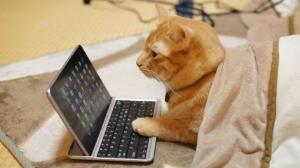 猫式ニャム ニャムね
