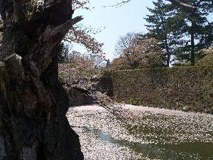 ♡旅行記♡ おはようございます もうすぐ 桜の季節ですね。 昨年 会津若松城の桜綺麗でしたが 時期逃した・・・今