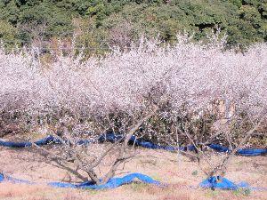 ♡旅行記♡ 友人と共に和歌山県まで行ってきました。  初めて来たけど、良いところがたくさんあるんですね。 和歌山