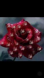 ♡旅行記♡ 昨晩はバービアで弾けてました、頭の中がお花で一杯になってます。 まだ 興奮幸福覚醒して眠れません。
