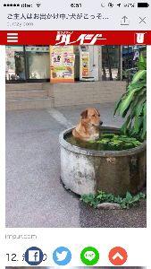 ♡旅行記♡ バンコクのボチらしいです。