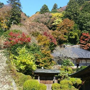もう良いじゃないか。 ある禅寺の紅葉