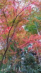 もう良いじゃないか。 今年は良い紅葉🍁が見られそうだ。