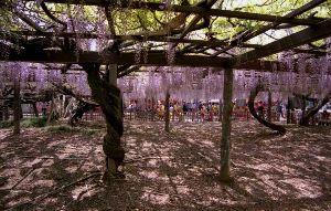 夢は旅地を駆け巡る 玉敷公園  http://gallery.nikon-image.com/146681635/alb
