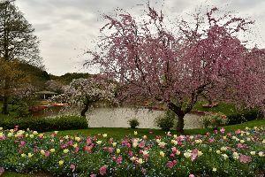 my picture town はままつフラワーパークから花画像をYouTubeで編集してみました  フォト画と一部動画を織り交ぜて