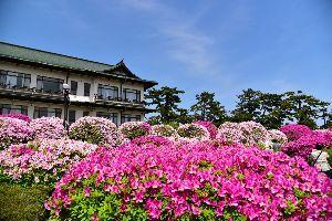 my picture town 愛知県蒲郡市の竹島にあります「蒲郡クラッシックホテル」での  つつじ祭りの様子を撮影してきました。