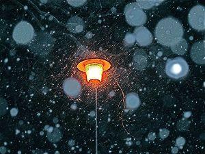 シニア/心の旅 おはようございます♪  昨夜の積雪は3.4㎝ほどで、寒さも緩んでいるので路地も庭も、あめゆき状態です