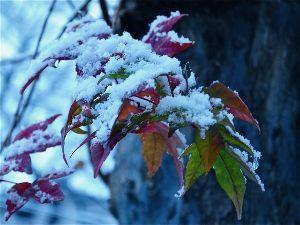シニア/心の旅 こんばんは♪  こちら、朝目覚めると外はうっすらと雪が積もっていました。ちらつく程度でしたが今日は一