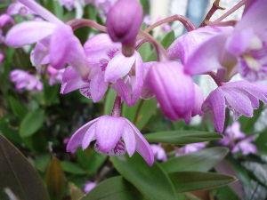 川柳・俳句・短歌 静かなお部屋へ~ おはようございます。  花冷えなのでしょうか? 朝晩は少し寒い陽気です。    陰日向あらばこそなれ