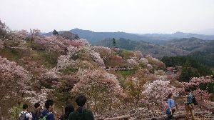関西SS友の会 クネクネツーお疲れぇー(^-^)/  私も予定通り バスツアーで吉野へ行って来ました(^o^)v