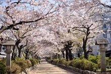 心の内を・・・ おはようございます  桜情報が多くなりました。 満開の頃に行こうと思っています。 桜の名所はたくさん