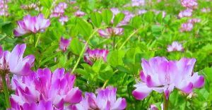 何となく話したい時 きょう ご近所さんちの(年配の方と) この花のこと話していたら・・・  「手に取るなやはり野に置け蓮