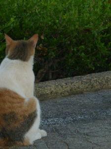何となく話したい時 〃 人間社会 一人で生きてゆくのは 大変な事が多いなぁって思ってるから  猫社会にも きっとあるだろ