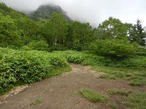 姫路の方で中高年の山の好きな人。 山頂付近はこの通りでした。   すま