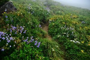 姫路の方で中高年の山の好きな人。 ただいま~   東北の100名山 7日間で9座登り 昨夜帰って来ました。  前半は晴れのち曇りでした