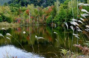 姫路の方で中高年の山の好きな人。 今晩は。  御嶽、乗鞍に行って来ました。 紅葉の良い時期でした。  紅葉の名所まいめ池の紅葉です。
