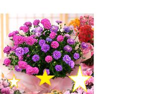 3776 - (株)ブロードバンドタワー 遅れまして申し訳ございません 敬老のお祝いに花束贈呈します。