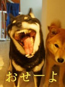 (`(●●)´)ブウ!日刊用語解説 解説