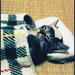 9831 - (株)ヤマダホールディングス もうだめにゃ o(=ω=)o     □■    □ ■    □  ■   □