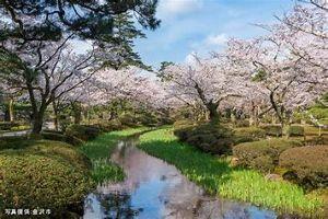 8698 - マネックスグループ(株) わっさん金沢来週ぐらいが桜みごろかも・・・ 食べ物美味しかったですよ\(^_^)/ スイーツもホント
