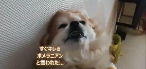 3656 - KLab(株) 犬がコロナに感染するって本当ですか⁉️