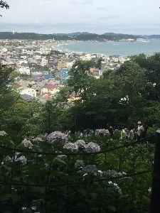 横浜、鎌倉でチャリチャリしませんか? 今日は、鎌倉長谷寺に行って来ました。 紫陽花見物でメチャ混み。 家内とのんびりと思ったら、また長男は