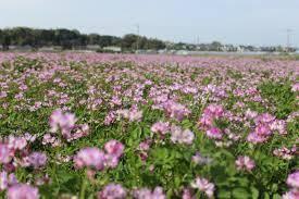 心の旅路!  ごんまるさん こんばんは~  何日か続いた陽気 また変わりますか?  風邪を引いたのですか? 花粉