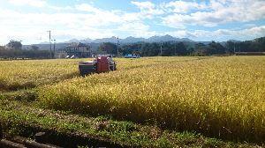 心の旅路! 浜さん、おさくさん  おはようございます。  秋晴れの日が続き、こちらも稲刈りはじまりました。 昨年