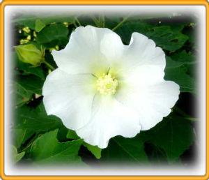 暇人が日記代わりに・・・・ 陽射しの強い真夏日が続いて給水が大変・・・・・  庭の花の方もこれからの時期は給水が大変・・・・