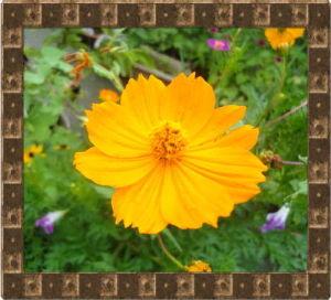 暇人が日記代わりに・・・・ 久々に雨らしい雨が降り花には恵みの雨に・・・・・・  朝顔だけが不運な目に遭い可哀想でした・・・・